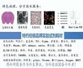 病理形态he实验、免疫组化、免疫荧光、wB、pcr、透射电镜-上海郑核
