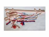肾与肾单位肾小球模型
