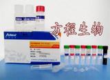 大鼠PRL ELISA测定试剂盒