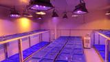 农业院校智能人工气候室建设 人工气候室规划与设计