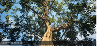 智慧风景园林景观虚拟仿真设计平台