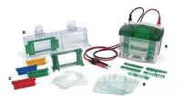 Bio-Rad Mini-Protean小垂直板電泳槽