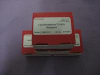 脂质体2000|Lipofectamine 2000