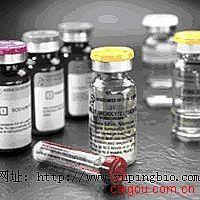 人P24蛋白(P24)ELISA试剂盒