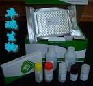 人八聚体转录因子(OTF2A)Elisa试剂盒
