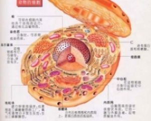 Vero细胞,猴肾细胞