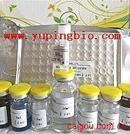 DR5 ELISA试剂盒