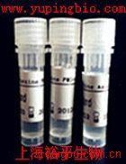 14-3-3蛋白抗体(植物)
