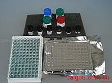 人抗核糖体P蛋白抗体(ARPA/Rib-P)ELISA试剂盒