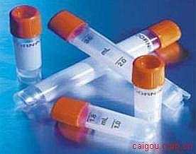 v-fosFBJ鼠科骨肉瘤病毒癌基因同源物(FOS)抗体