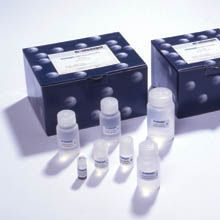 人E选择素(E-Selectin/CD62E)ELISA试剂盒