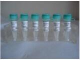 进口标准品CAS号:25775-90-0标准品cis-辣椒素