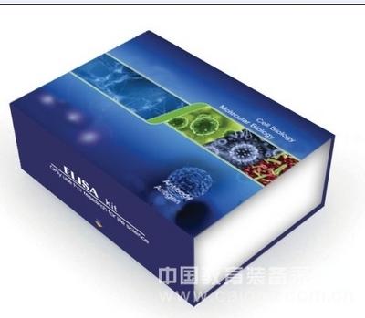 大鼠乙酰胆碱酯酶(AChE)ELISA试剂盒