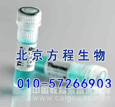 大鼠免疫球蛋白A(IgA)ELISA法