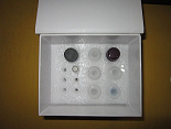待测大鼠血管内皮细胞粘附分子1(VCAM-1/CD106)ELISA试剂盒价格