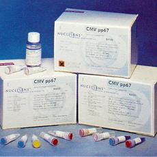 小鼠破骨细胞分化因子(ODF)ELISA试剂盒