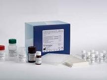 大鼠吡啶交联物(PY)ELISA试剂盒