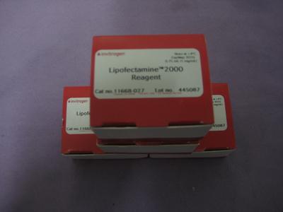 脂质体2000 Lipofectamine 2000