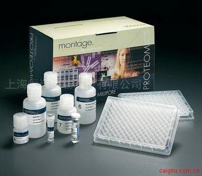 人周期素依赖性激酶5 ELISA试剂盒