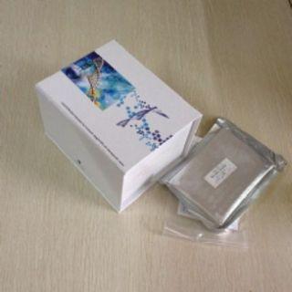 小鼠β半乳糖苷酶(βGAL)ELISA试剂盒