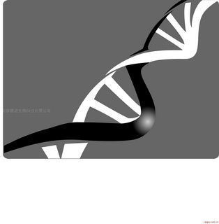 碧波TUNEL细胞凋亡检测试剂盒(显色法)(石蜡切片专用)