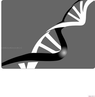 western blotting 检测试剂盒 蛋白提取 电泳