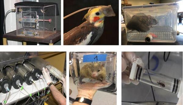 蝙蝠等野生动物能量代谢测量技术