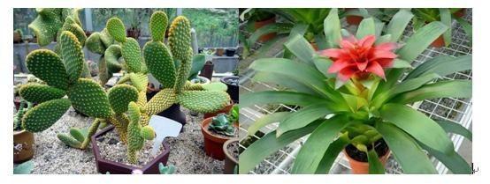 氧电极应用-景天酸代谢途径植物的光合研究
