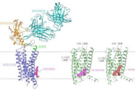 Nature:人体最大蛋白质家族研究获重要成果