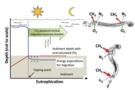 幽蚊属气孢运输的孔隙水甲烷—能量优势