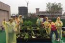 大学图书馆屋顶打造 !香草花园美观芬芳