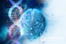 Science最新解密:人脑和猴脑差异在哪里