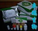 山羊白介素2(IL-2)Elisa试剂盒
