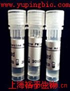 信号转导与转录激活因子1抗体