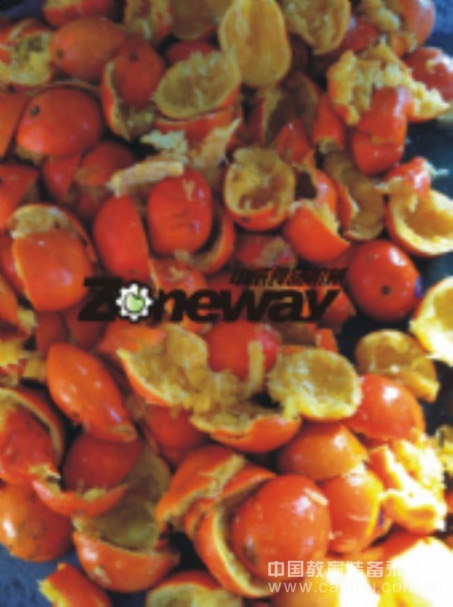 QBZJ-6型橘子去皮榨汁机