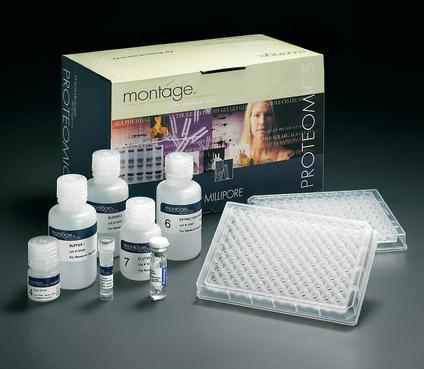 小鼠水通道蛋白4(AQP4)ELISA试剂盒