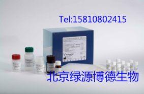 人周期素依赖性激酶4Elisa说明书,人CDK-4进口elisa试剂盒代测