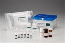 猪黑色素瘤转移表面黏附分子(MMSAM)ELISA试剂盒
