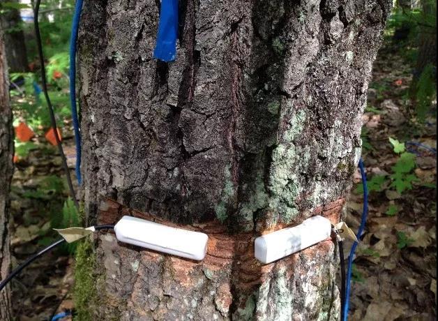 用生物质电容数据研究树木水分利用策略